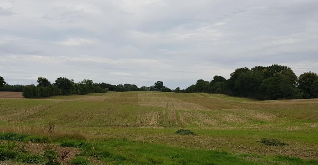 Das Bild zeigt ein abgemähtes Feld, das von Knicks eingerahmt ist.